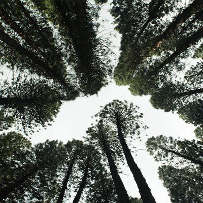foret-arbre-ecologie-environnement-kqueo-bureau